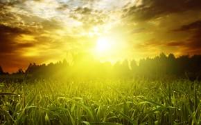 Картинка зелень, поле, лето, небо, трава, солнце, облака, лучи, деревья, роса, рассвет, утро