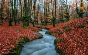 Картинка осень, вода, деревья, природа, листва, поток, Испания
