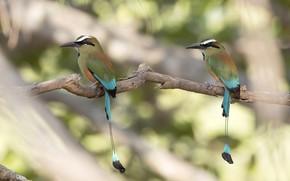 Картинка птицы, ветка, хвост, экзотика