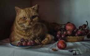 Картинка взгляд, виноград, рыжий кот, котейка