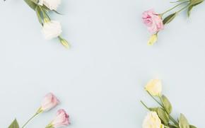 Картинка цветы, букеты, эустома