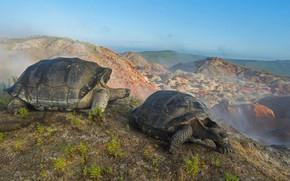 Картинка Эквадор, Галапагосские острова, гигантская черепаха, вулкан Альседо