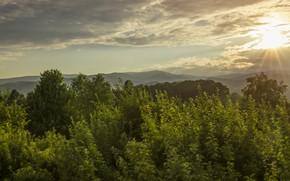Картинка солнце, деревья, природа, листва, кроны