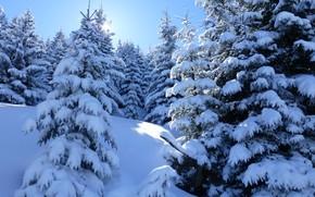 Картинка зима, снег, деревья, природа, ели