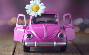 Картинка цветок, игрушка, доски, ромашка, машинка, боке