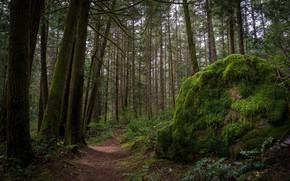 Картинка зелень, лес, пейзаж, природа, красота, тропа, в лесу