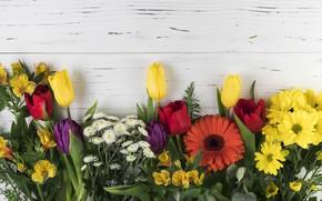 Картинка цветы, colorful, тюльпаны, хризантемы, wood, flowers, beautiful, tulips, spring, roses, gerbera, multicolored