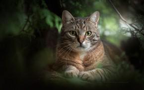 Картинка зелень, кошка, взгляд, портрет, мордочка, котейка