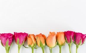 Картинка цветы, розы, желтые, розовые, бутоны, yellow, pink, flowers, romantic, roses, cute