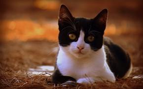 Картинка кошка, взгляд, мордочка, котёнок, боке, котейка