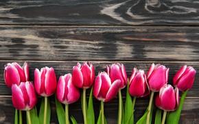 Картинка фон, тюльпаны, розовые, коричневый, wood
