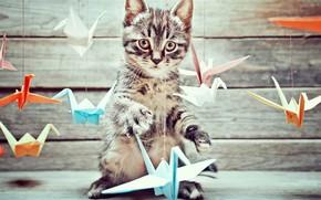 Картинка фон, доски, птички, котёнок, оригами, боке