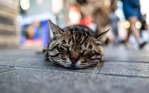 Картинка кот, отдых, улица, спит, коте
