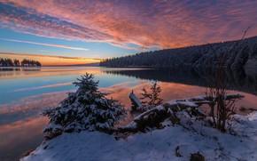 Картинка зима, лес, снег, пейзаж, природа, река, рассвет, утро, берега