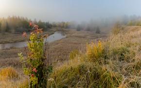 Картинка осень, лес, деревья, пейзаж, природа, туман, ручей, куст, утро, травы, заморозки, речушка, Vaschenkov Pavel