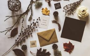 Картинка листья, надпись, ветка, шишка, конверт