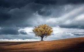 Картинка небо, дерево, земля