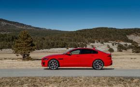 Картинка дорога, красный, дерево, Jaguar, вид сбоку, 2020, Jaguar XE