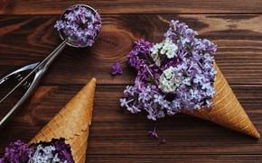 Картинка цветы, рожок, wood, flowers, сирень, spring, lilac, cone