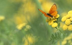 Картинка цветок, бабочка, боке
