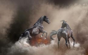 Обои природа, поза, туман, фон, пожар, огонь, конь, лошадь, дым, жеребец, кони, обработка, лошади, пара, пар, ...
