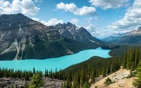 Картинка лес, небо, облака, горы, озеро, голубое, берег, вид, ели, Канада, Альберта, водоем, Банф