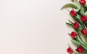 Картинка цветы, тюльпаны, красные, red, flowers, tulips