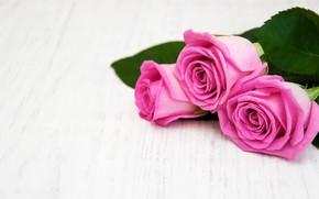 Картинка белый, стол, фон, розы, розовые, wood, pink, roses, bouguet, Olena Rudo
