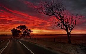 Картинка дорога, дерево, зарево