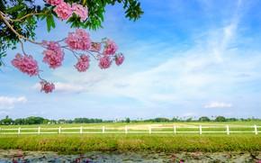 Картинка поле, трава, деревья, ветки, река, весна, цветение, landscape, pink, blossom, beautiful, tree, spring, bloom