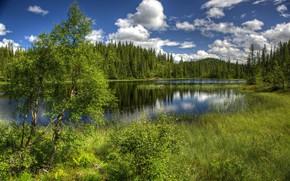 Картинка трава, вода, пейзаж, природа