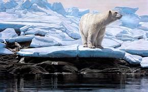 Картинка зима, льдины, белый медведь, Terry Isaac
