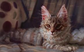 Картинка котенок, лежит, мейн кун