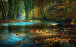 Картинка лес, листья, речка