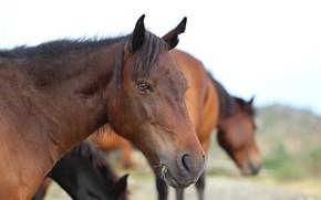 Картинка морда, фон, лошадь