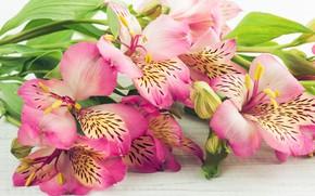 Картинка цветы, букет, альстромерии, IRINA BORT