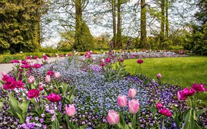 Картинка цветы, парк, весна, клумба