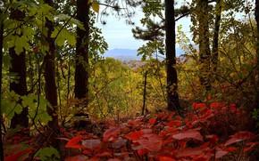 Картинка Осень, Fall, Листва, Autumn, Leaves