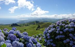 Картинка море, лето, небо, облака, свет, пейзаж, цветы, горы, природа, туман, холмы, голубое, берег, побережье, поля, …