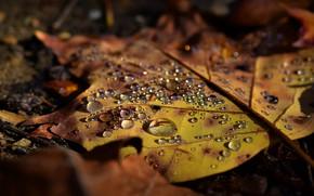 Картинка осень, капли, желтый, природа, лист, земля, листок, лежит, капли воды, осенний, кленовый