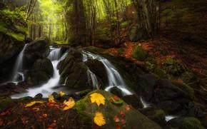 Картинка осень, лес, листья, пейзаж, горы, природа, камни, водопад, национальный парк, Болгария, заповедник, речушка, Витоша