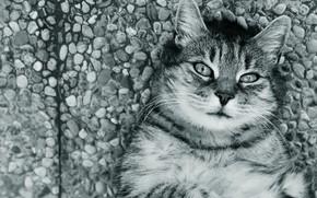 Картинка дорога, кошка, кот, взгляд, морда, галька, камни, серый, лежит, черно-белое, полосатый, монохром, развалился