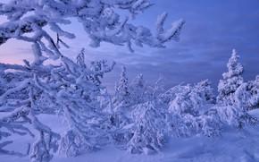 Картинка зима, Снег, мороз, Россия, Мурманская область