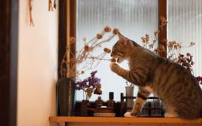 Картинка кошка, игра, окно, букет, подоконник, кот
