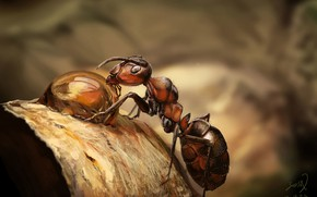 Картинка лес, роса, арт, муравей, Painting practice, Eli Fabien