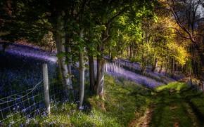 Картинка дорога, забор, весна