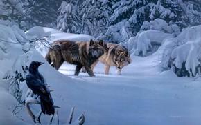 Картинка зима, птица, волки, ворон, Daniel Smith