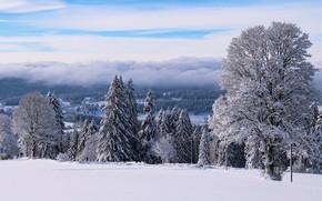 Картинка зима, иней, лес, небо, облака, снег, деревья, туман, столбы, вид, сказка, даль, склон, холм, дымка