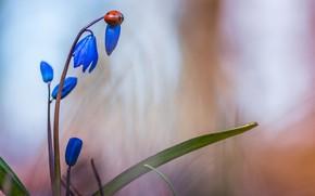 Картинка цветок, листья, макро, природа, божья коровка, жук