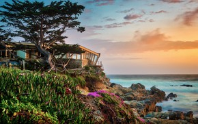 Картинка пейзаж, природа, камни, дерево, океан, берег, растительность, США, Carmel Beach
